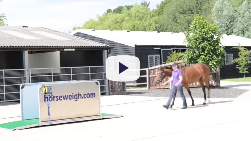 Horse Weigh In Action Video