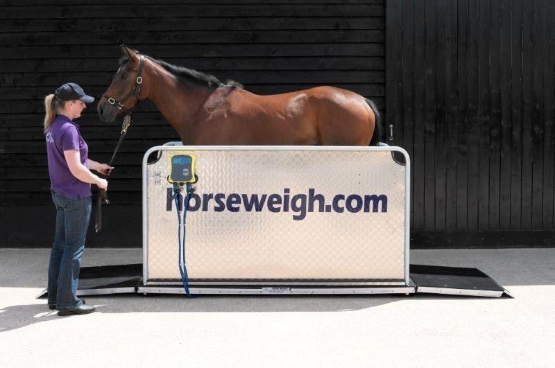Curragh Horse Weigh Platform