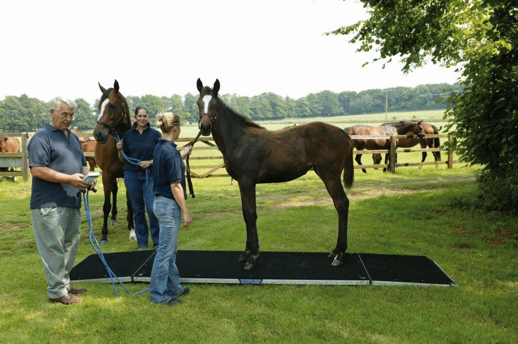Horse Weigh Newmarket