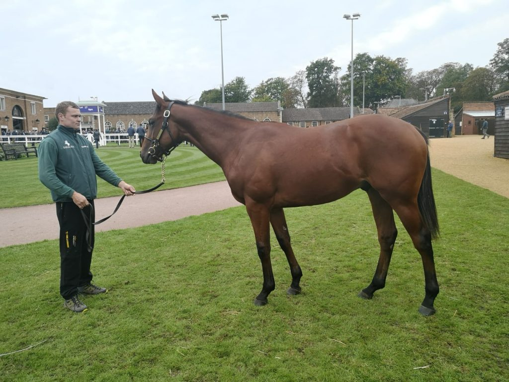 Tattersalls Yearling Book 1
