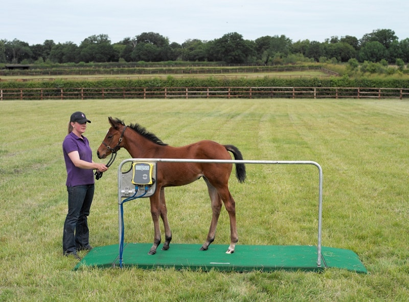 Mini Tokyo horse weigh