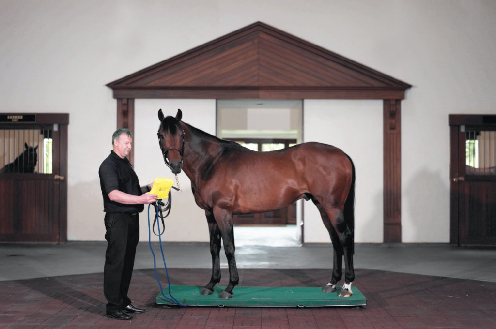 Mini Toyko horse weighing platform