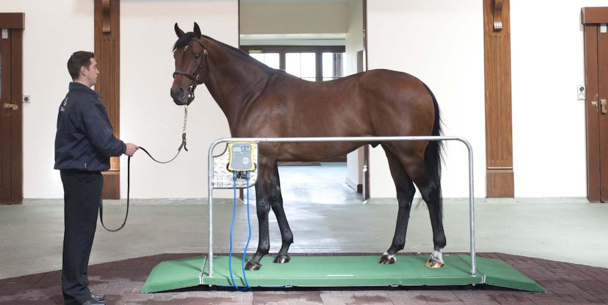 Horse Weigh Mini Tokyo Thoroughbred platform