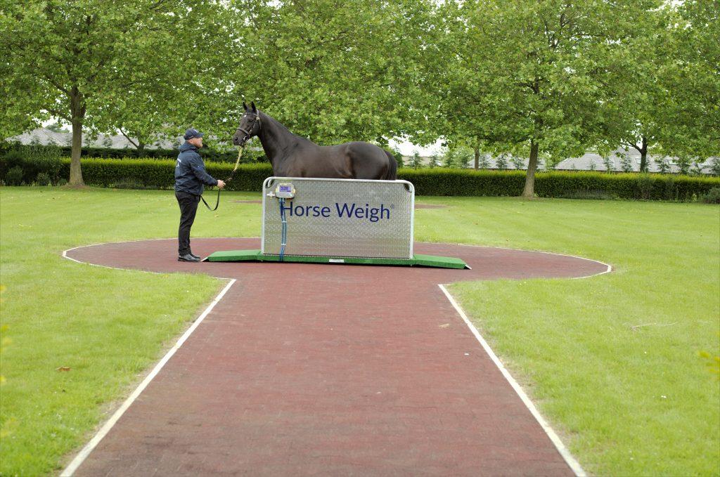 Curragh Horse Weighbridge