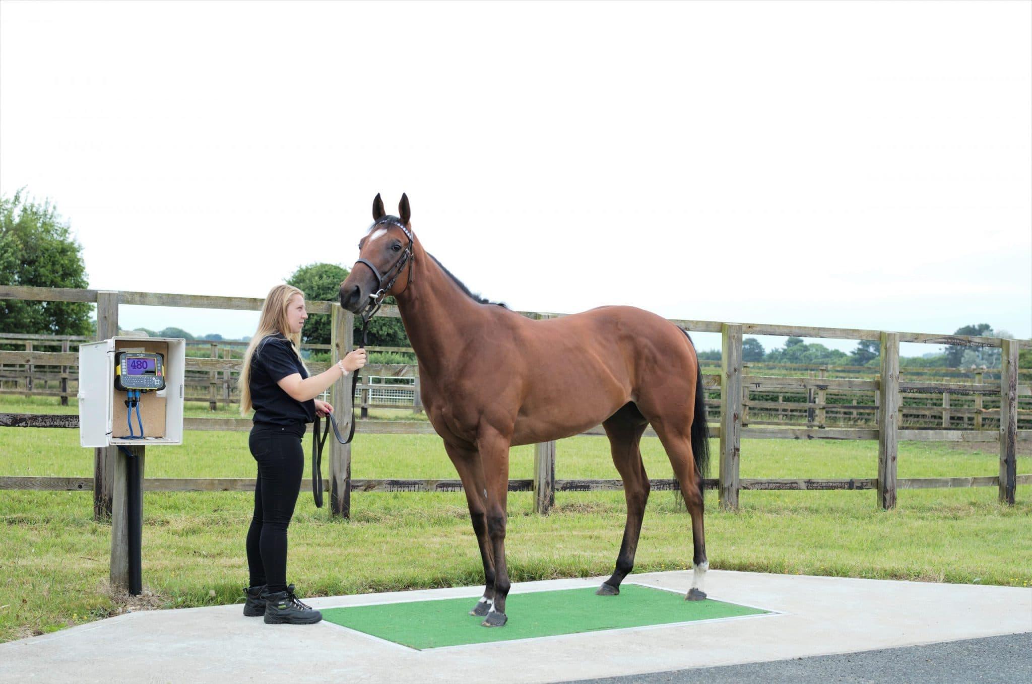 Kentucky Horse Weighbridge