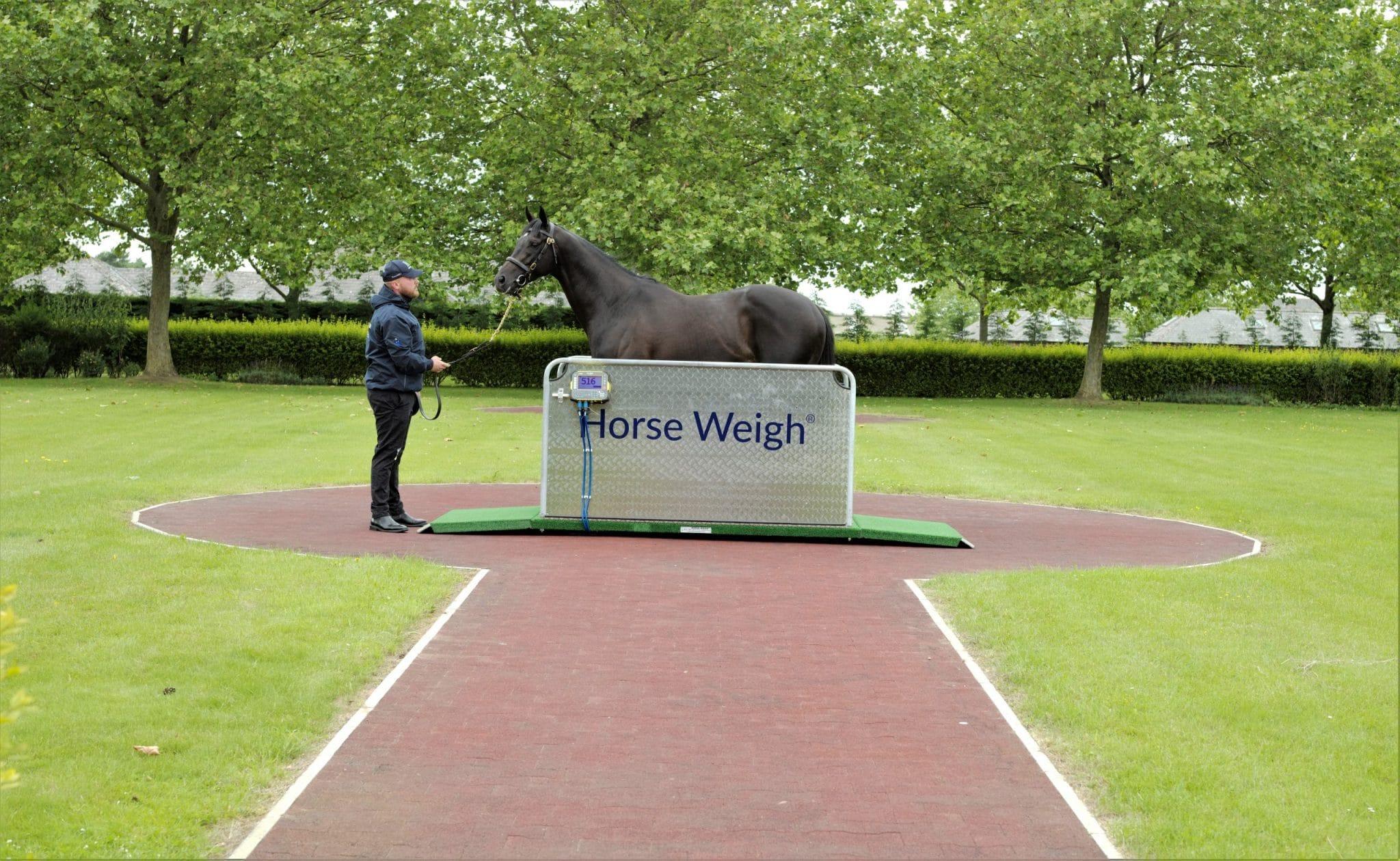 Olympic Horse Weighbridge